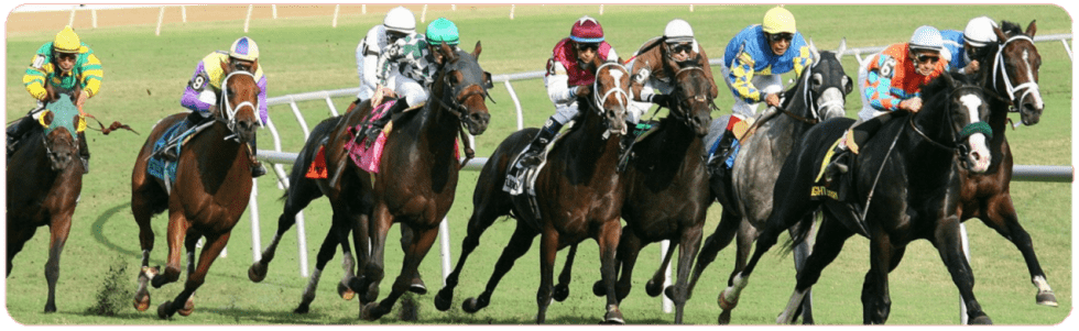 best sites for betting on horse racing