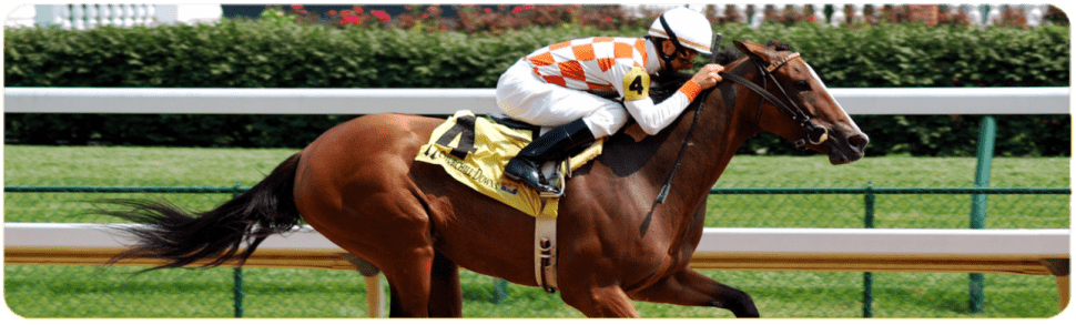 Lucky 31 strategy in horse racing betting